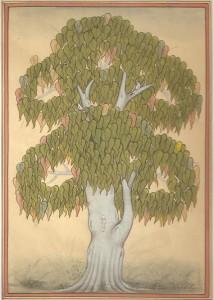 Pipal Tree b001