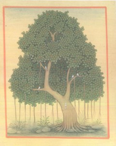 Banyan Tree b003