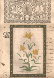Mugal Flowers on old paper d016