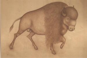 Animal i014
