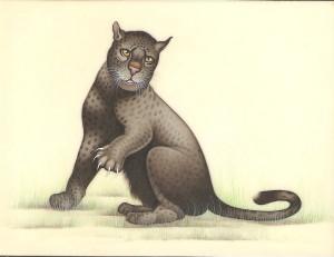 Animal i023