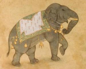 Elephant j009