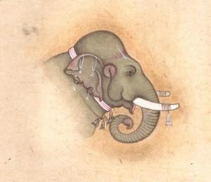 Elephant j013