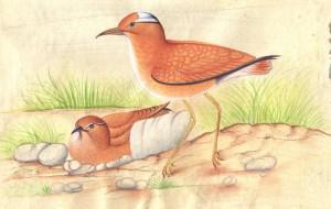 Bird k005