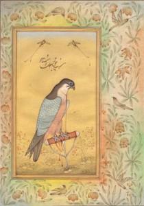 Bird k007