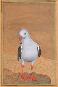 Bird k016