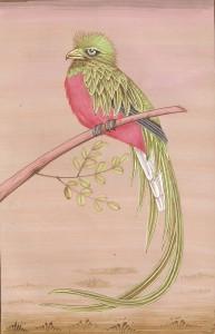 Bird k020