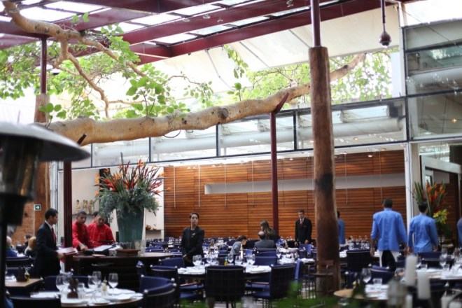 Restaurant that's built around a fig tree.