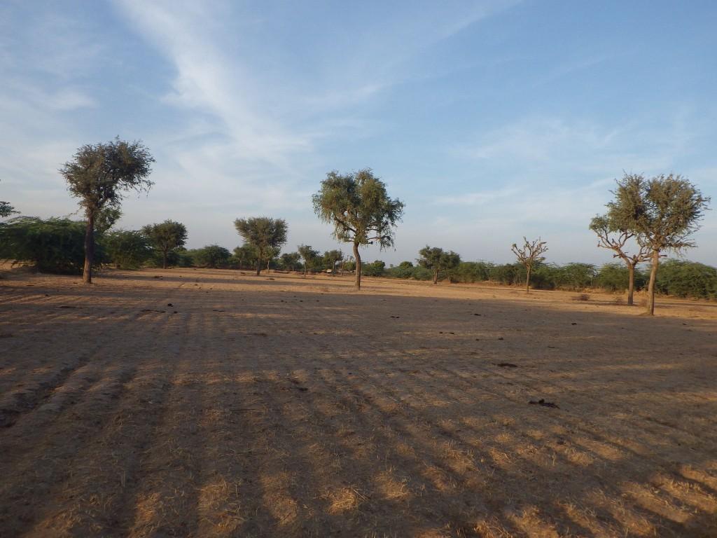 india field