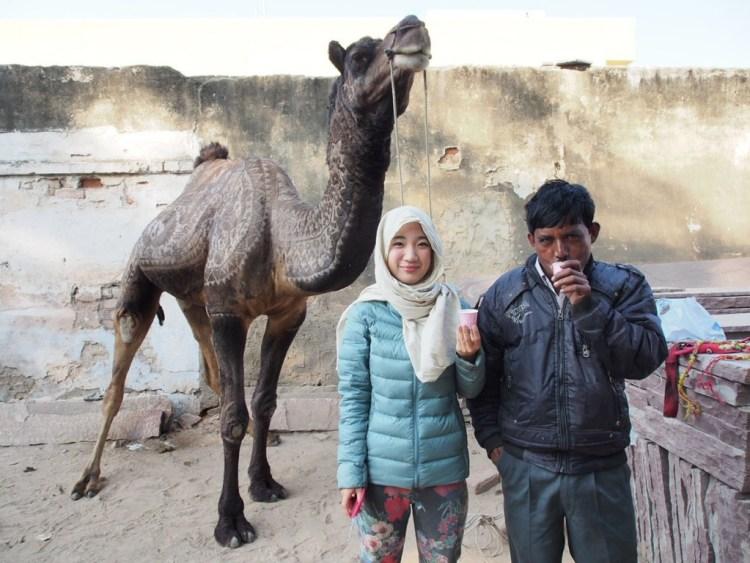 camel bikaner