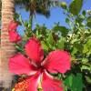 ハワイ旅行2016.2 その1 日程決定から予約まで
