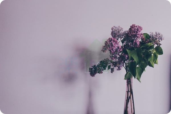 flower-731480_640