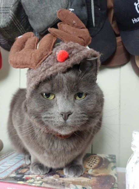 cat dressed as a reindeer