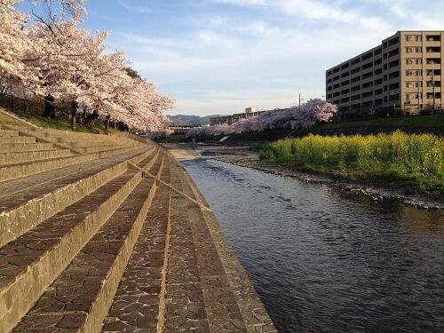 桜堤公園2