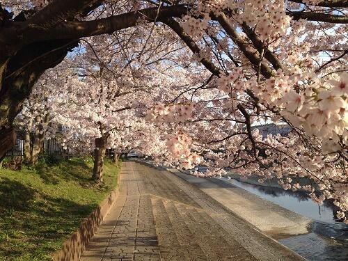桜堤公園3