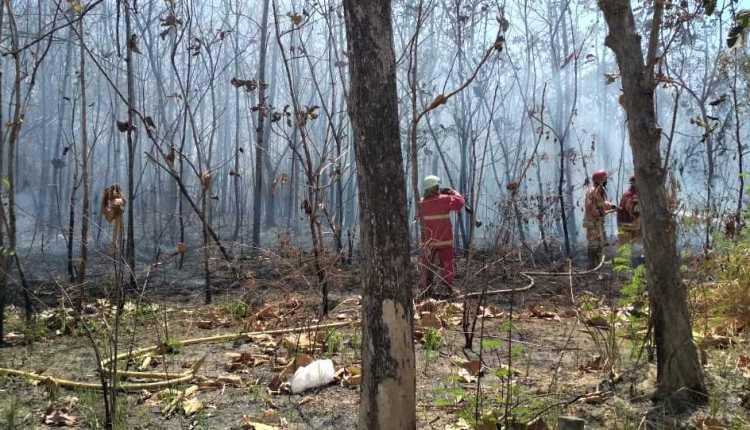 Hutan jati rakyat seluas alami kebakaran