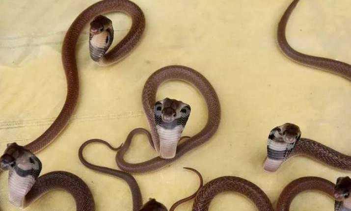 temuan ular