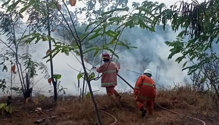 hutan rph sampang, bkph dander, alami kebakaran,