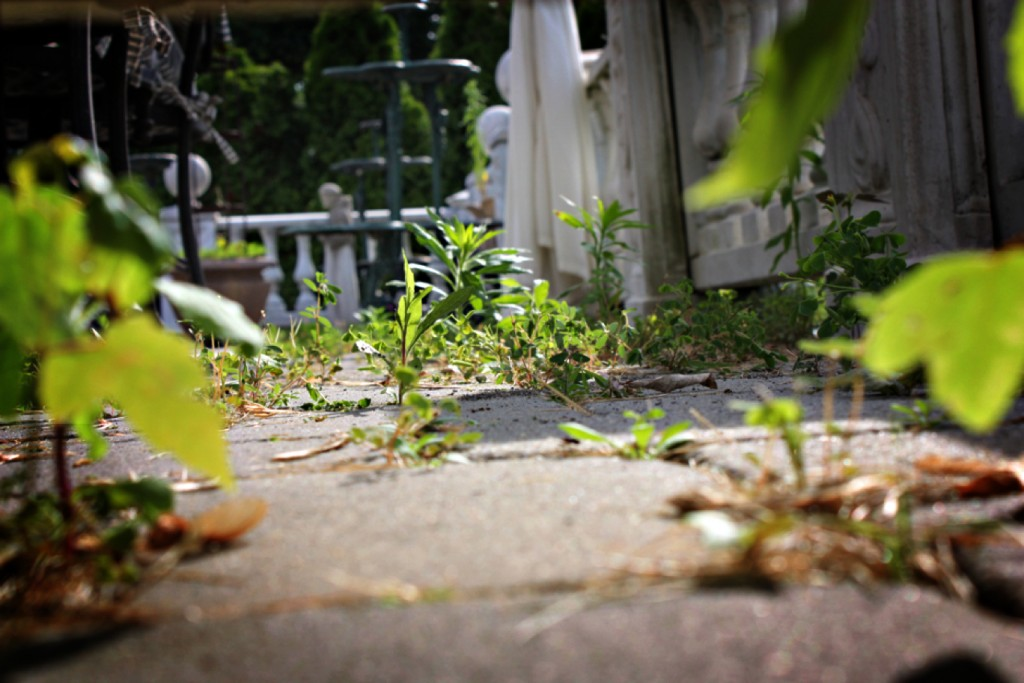 How to Prevent Weeds From Growing Between Your Patio