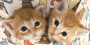 Basics of Trap-Neuter-Vaccinate-Return (TNVR) @ SAFE Haven for Cats | Raleigh | North Carolina | United States