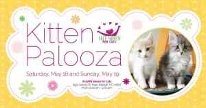 Kitten Palooza @ SAFE Haven For Cats | Raleigh | North Carolina | United States