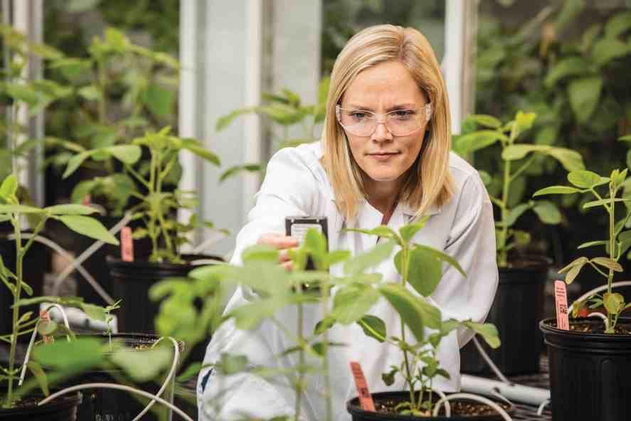 BASF's greenhouse research