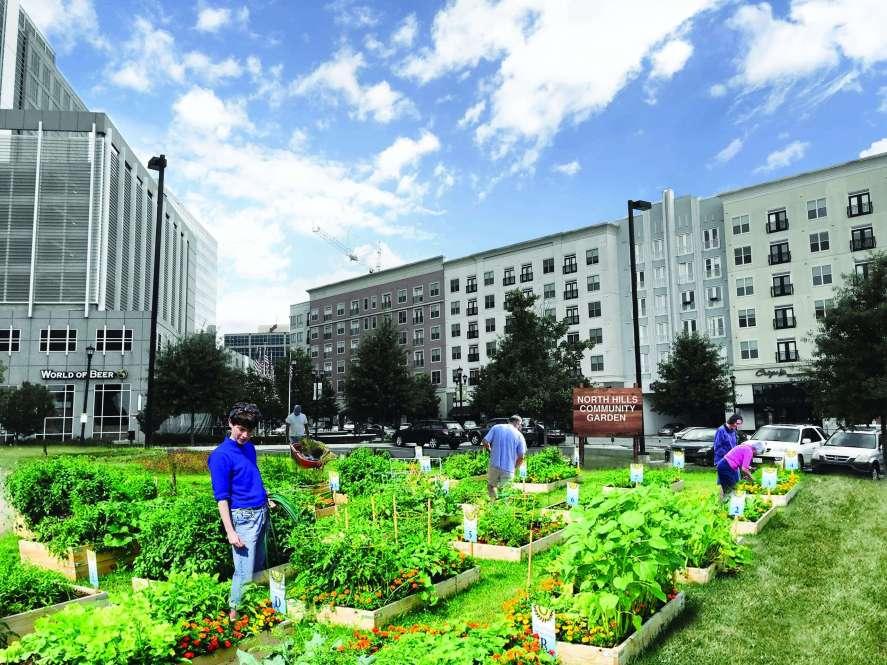 Community Food Lab Park District Garden