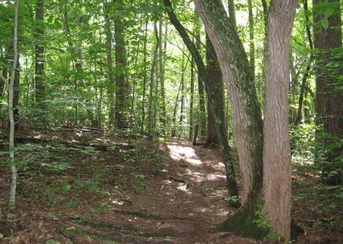 Brookhaven Trail_1_1