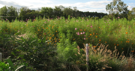 Walnut Creek Wetland center flower bed