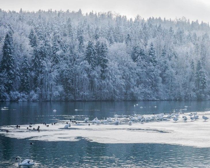 Zbiljsko jezero, Ljubljana, Slovenia