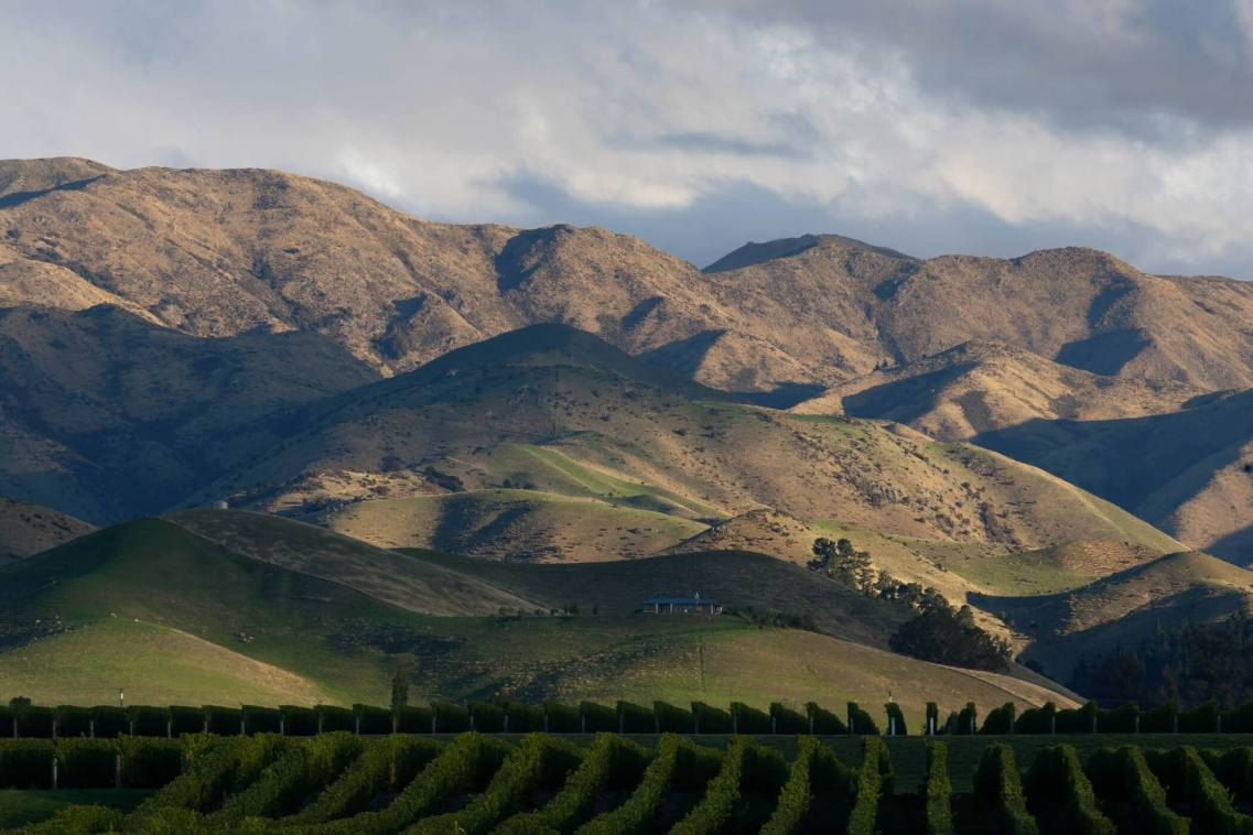 Vineyards, Marlborough, New Zealand.