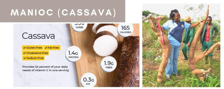 tapioca versus manioc (