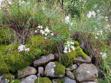flora Rodopi