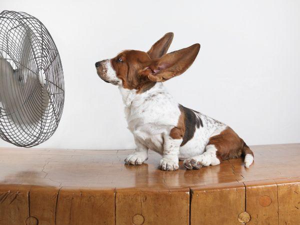 Remedii contra caldurii