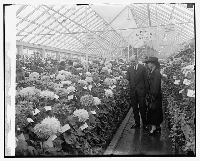 Mrs. Coolidge and chrysanthemums
