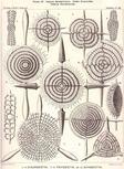 spumellaria