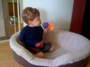 Toddler sitting in a dog bed
