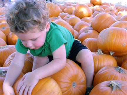 Toddler_in_a_pumpkin_patch