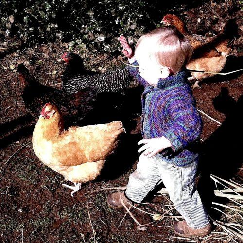 Boy Herding Chickens