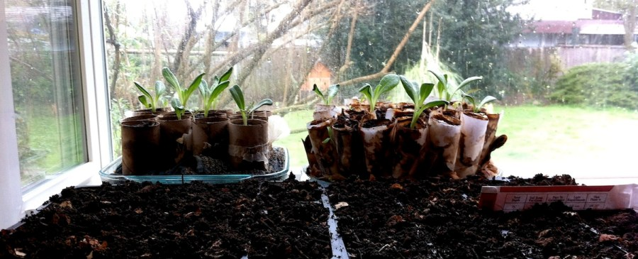 Seeds Started in Window Box