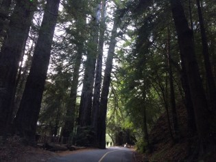 Driving in Big Sur State Park.