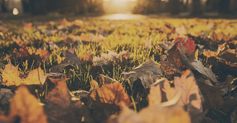 Father Rakes Leaves