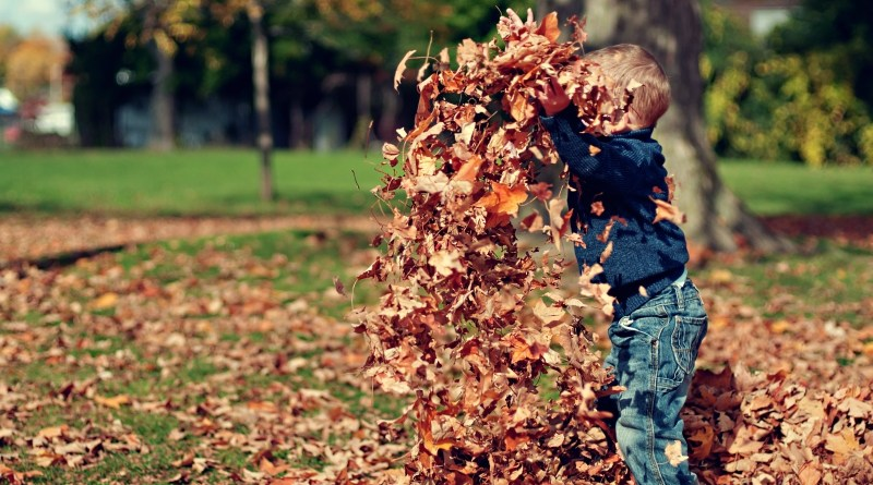 A young boy playing in Fall leaves