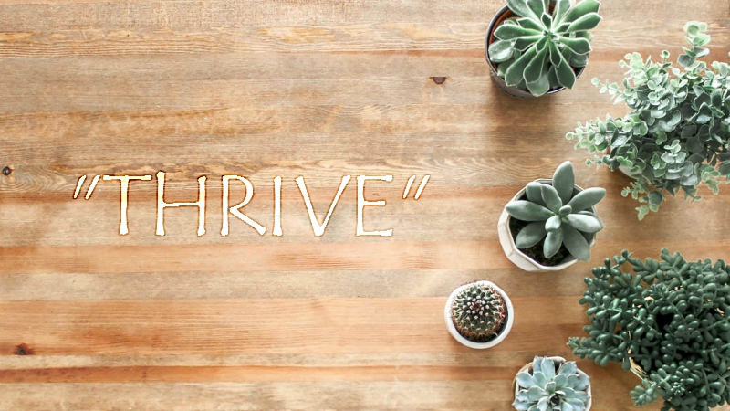 Survive or Thrive: A Song For the New Year