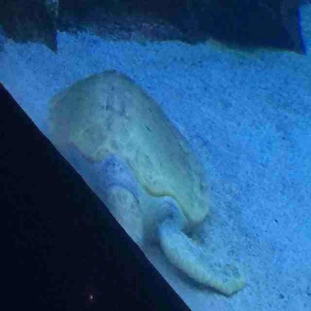 Turtle Oceanarium KLCC Aquarium