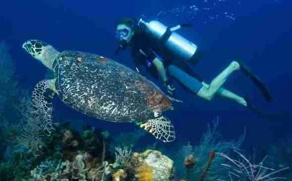 Diving in Phu Quoc
