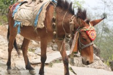 We saw loads of horses and donkeys transporting goods from one village to the next. I really like the designs on the head.