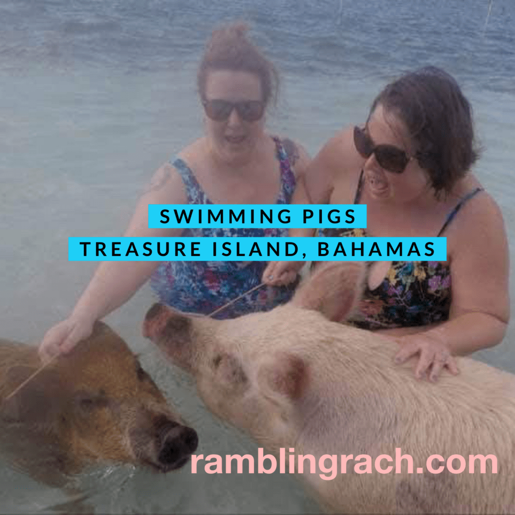 Swimming with pigs at Coco Cay Bahamas