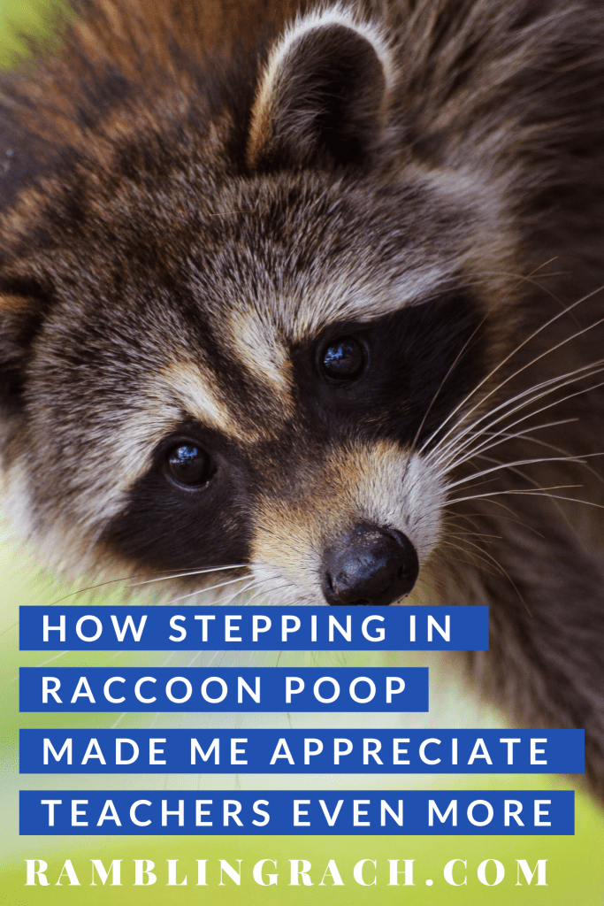 I appreciate teachers more after stepping in raccoon poop.