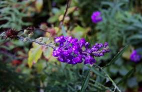 DSCN0098-flower
